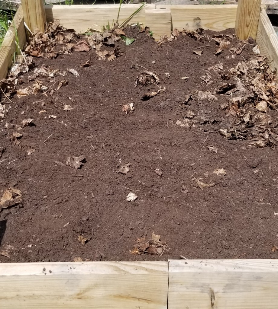 empty barren potato patch with some dried leaves around the edges